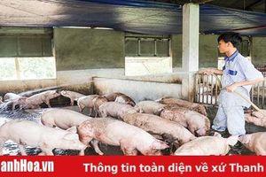 Tập trung chỉ đạo thực hiện chăn nuôi an toàn sinh học, kiểm soát tái đàn lợn để phòng, chống bệnh Dịch tả lợn Châu Phi