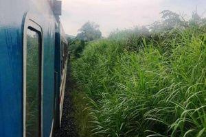 Chạy băng qua đường sắt, người phụ nữ bị tàu tông chết