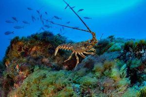 'Lưới ma' ám ảnh Đại Tây Dương
