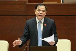 Bộ trưởng Nguyễn Xuân Cường nói về thiệt hại do dịch tả lợn Châu Phi gây ra