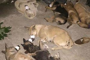 Truy bắt băng nhóm 'cẩu tặc' từ Hà Nội lên Hòa Bình trộm cả tạ chó