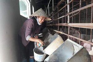 Giá lợn hơi tăng cao: Lo ngại giấu dịch, bán chạy đàn