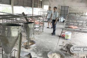 Chậm hỗ trợ thiệt hại dịch tả lợn, nông dân khốn đốn