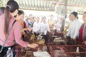 Bắc Giang: HTX là nơi phụ nữ khởi nghiệp