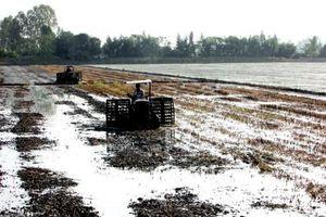 Vĩnh Thạnh- Giải pháp nào để sản xuất nông nghiệp bền vững?