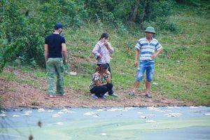 TĐ Hòa Phát tăng cao doanh thu nông nghiệp... lại 'lềnh phềnh' ô nhiễm môi trường