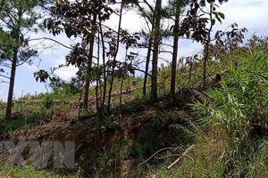 Quảng Trị: Điều tra vụ cán bộ bảo vệ rừng bị hành hung tại trụ sở