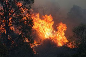 Cháy rừng hoành hành khắp miền Đông Australia