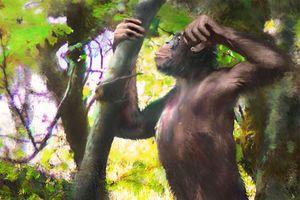 Tổ tiên loài người biết đi đứng bằng hai chân từ 12 triệu năm trước