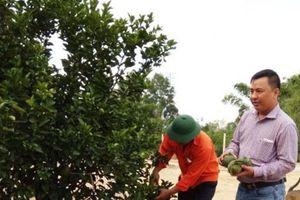 Bình Định: Nhiều giải pháp phát triển cây ăn quả