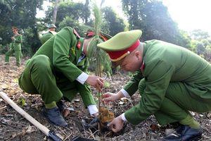 Trồng 2.000 cây thông Mã Vĩ tại khu đi tích K9