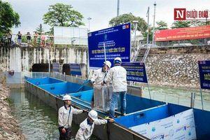 Tháo dỡ khu thử nghiệm xử lý nước thải công nghệ Nhật Bản trên sông Tô Lịch