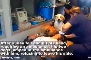 Đoạn video ngắn khiến bạn thật sự xúc động về hai chú chó