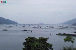 Ngư dân nuôi tôm hùm ở Vũng Rô, Phú Yên khẩn trương chạy bão