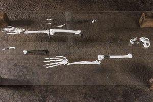 Phát hiện hài cốt của loài vượn bí ẩn có 'đôi chân giống người'