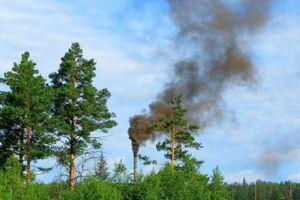 Cây xanh giảm ô nhiễm không khí hiệu quả hơn công nghệ