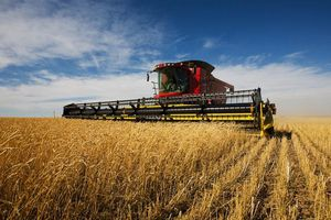 Giá các loại nông sản chủ chốt đồng loạt giảm trong tuần này