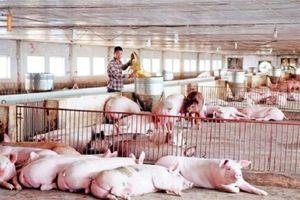 Giá thịt lợn tăng gần gấp đôi, chưa có dấu hiệu dừng lại