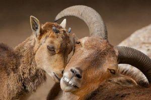 Phát ghen với khoảnh khắc thân mật độc đáo của động vật
