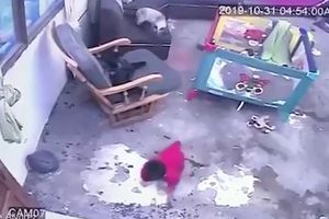 Ngỡ ngàng chú mèo chủ động lao ra ngăn em bé khỏi lăn xuống cầu thang