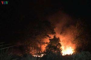 Liên tiếp xảy ra các vụ cháy rừng ở Hải Phòng