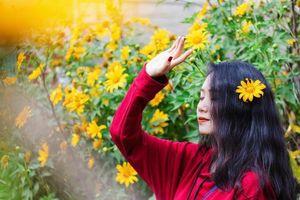Giới trẻ đua nhau check-in hoa dã quỳ tại Ba Vì
