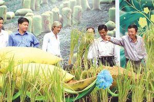 Phát triển bền vững nông nghiệp - nông dân - nông thôn Việt Nam