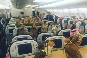 Ngỡ ngàng trước sự chịu chơi của giới siêu giàu: Mua 80 vé máy bay cho chim ưng