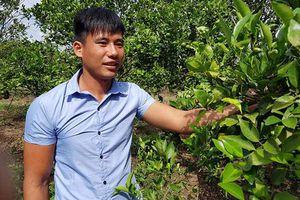 Gia Lai: Hotboy 23 tuổi bỏ túi hơn nửa tỷ/năm nhờ mê cam sành, quýt đường