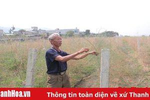 Người cựu chiến binh đưa cây 'bạc triệu' vào đồng ruộng