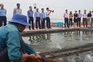 Thăm mô hình nuôi cá nước ngọt mang lại hiệu quả cao ở Hưng Yên