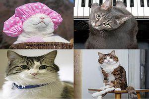 Top 4 'hoàng thượng mèo' sở hữu khả năng đặc biệt khiến cộng đồng thán phục