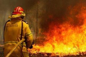 Lính cứu hỏa Australia để lại lời xin lỗi vì uống sữa trong nhà dân