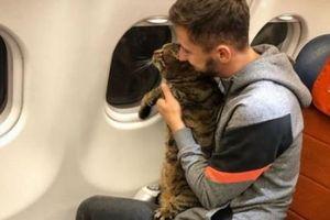 Tráo mèo để lên máy bay rồi đăng Facebook khoe, hành khách bị điều tra