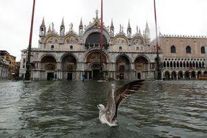 Venice 'thất thủ' vì triều cường cao nhất trong 50 năm