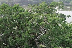Phát hiện đàn chim cổ rắn quý hiếm ở Đồng Nai