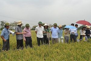 Hà Nội: Nhiều sản phẩm giống cây trồng, vật nuôi năng suất cao được ứng dụng vào sản xuất