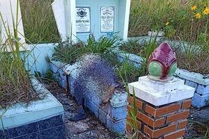 Thi thể phân hủy nằm trên ngôi mộ ở Đà Lạt