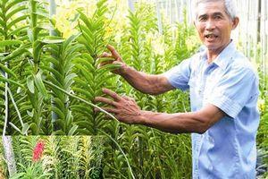 Tây Ninh: Khấm khá nhờ trồng lan trên đá