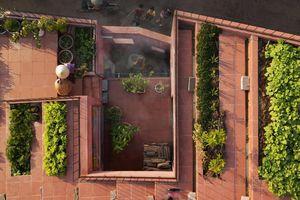 Vườn rau 7 bậc thang trên mái nhà ở Quảng Ngãi lên báo nước ngoài