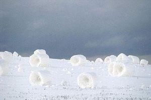Vì sao có hiện tượng tuyết cuộn?
