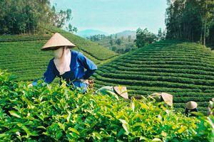 Sử dụng phân bón Văn Điển: Hướng đi mới trong canh tác nông nghiệp