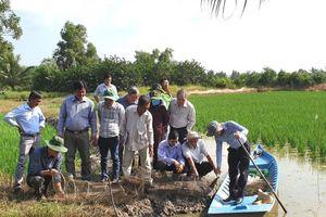 Giải pháp nâng cao hiệu quả mô hình nuôi tôm càng xanh xen lúa