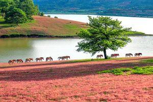 Trải nghiệm cao nguyên cỏ hồng Lang Biang