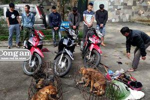 Xóa ổ nhóm 'câu chó'
