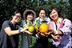 Nhóm phụ nữ cộng đồng ASEAN lạc giữa mùa cam