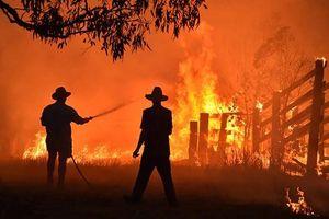 Lỡ tay đốt hơn 1 triệu héc-ta rừng vì bảo vệ trại cần sa ở Australia