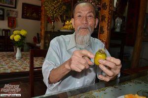 Chuyện thú vị quanh những cây hồng tiến vua sắp tuyệt chủng ở Phú Thọ