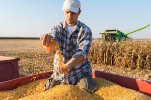 Giá các loại nông sản giảm mạnh trong phiên giao dịch cuối tuần