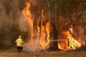 Australia bắt đầu khắc phục hậu quả cháy rừng